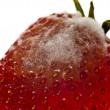 Strawberry with mold fungus, no suitable for consumption — Stock Photo #24838051