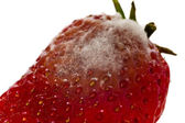 Strawberry with mold fungus, no suitable for consumption — Foto de Stock