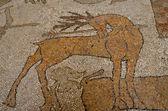 Otranto Cathedral: mosaic ground detail - Puglia. South Italy — Stock Photo