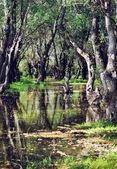 Dniester River — Stock Photo