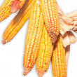 Dried Corn Grouping — Stock Photo