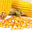 Fresh corn — Stock Photo #14145460