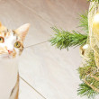 Stock Photo: Cat and balls christmas tree