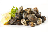 Clams — Stock Photo