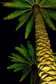 Lighted Palms — Stock Photo