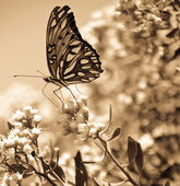 Sepia Butterfly — Stock Photo