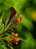 Butterfly on red and yellow flowers. — Stock Photo