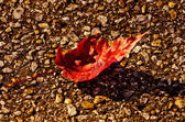 Red Leaf on Sidewalk. — Stock Photo