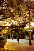 Golden Light on a Sidewalk — Stock Photo