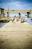 Sitting on the Dock of the Bay — Stock Photo