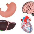 Set of human organs. brain, heart, liver, stomach — Stock Vector