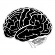 Model of human brain — Stock Vector