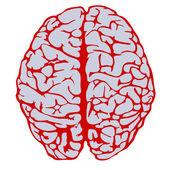Model van menselijke hersenen — Stockvector
