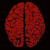 人間の脳のモデル — ストックベクタ