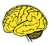 Modelo do cérebro humano — Vetor de Stock