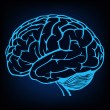 Model of human brain - Stock Vector
