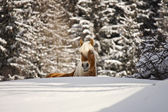 Horse in a winter landscape — Stock Photo