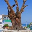 Tree carved at matala, Crete — Stock Photo #31192165