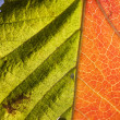 Natural background with leaf — Foto de Stock