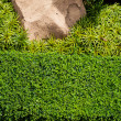 Green grass background with big stone and bush — Stock Photo