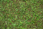 Cutted grass background — Stock Photo