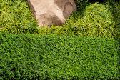 Fondo verde hierba con piedra grande y bush — Foto de Stock