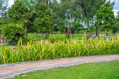 Sidewalk in Titiwangsa Park — Stock Photo
