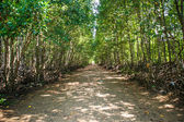 Forest path in Krabi — Stock Photo