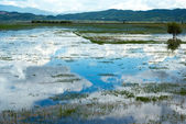 Lashihai international wetland — Stock Photo