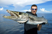 Il barracuda gigante — Foto Stock