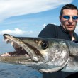 The giant barracuda — Stock Photo