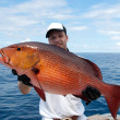 Stock Photo: Red snapper
