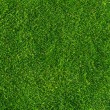 Lawn texture — Stock Photo #15346565