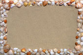 Seashells picture frame — Stock Photo