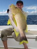 сцена рыбалки. blubberlip снаппер — Стоковое фото