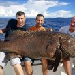 Giant grouper — Stockfoto