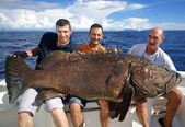 Giant grouper — Foto de Stock
