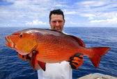 Rode snapper — Stockfoto