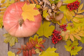 Autumn background with pumpkin, mushrooms, rowanberry — Stock Photo