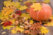 Pumpkin, mushrooms, rowanberry and maple leaf — Stock Photo