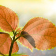 Beautiful Colorful Leaves and Sun Light — Stock Photo #45171523