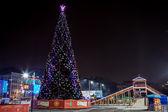 Tree Vladivostok — Stock Photo