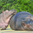 Happy hippopotamus friends — Stock Photo #16273565