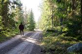 Woodman marche sur un chemin de terre — Photo