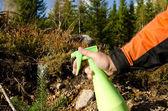 Protecting tree plant — Stock Photo