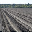 Plough rows — Stock Photo
