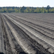Plough rows — Stock Photo #16214639