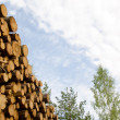 Timber stack detail - Stock Photo