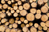 Biomass — Stock Photo