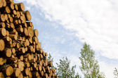 Timber stack detail — Stock Photo